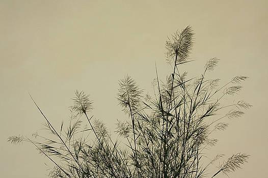 Nature Scenery in Lijiang China by Julia Hiebaum