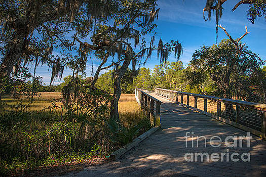Dale Powell - Nature Trail through Daniel Island SC