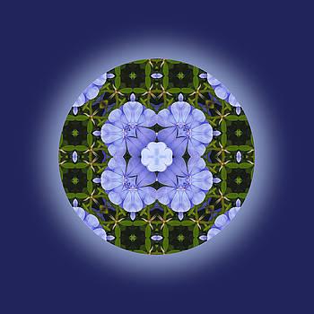 Nature Web Mandala by Jorge Gomez