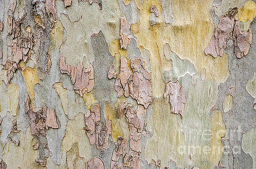 Nature's Abstract by Sue Smith