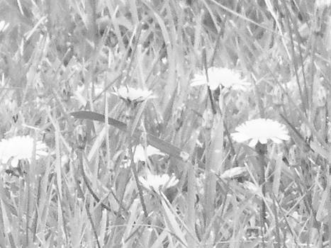 Natures Beauty blk n wht by Paula Giampola