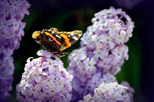 Nature's Beauty by Clarice  Lakota
