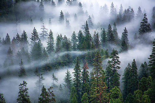 Nature's Blanket by Nicki Frates