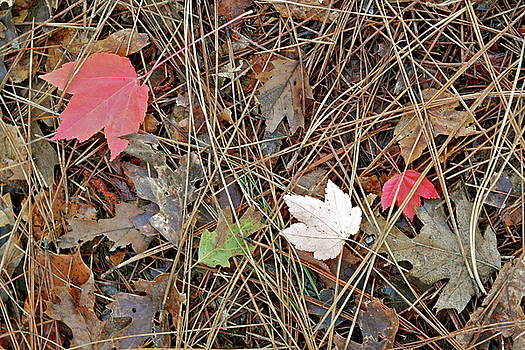Nature's Collage by Michele Myers
