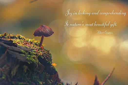 Nature's Gift by John Rivera
