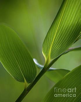 Heiko Koehrer-Wagner - Natures Green Palette four