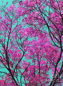 Natures Magic - Pink and Blue by Rebecca Harman