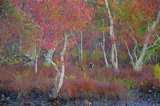 Natures Palette by Jim Cook