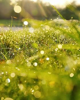 Nature's Sparkles by Nikki McInnes