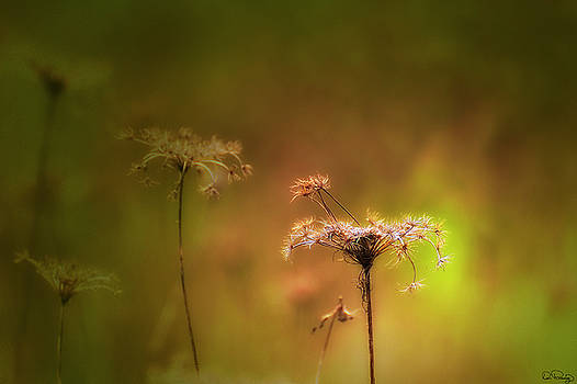 Nature's Spotlight by Dee Browning