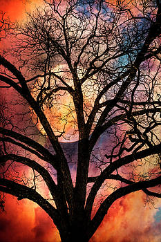 Nature's Stained Glass by Debra and Dave Vanderlaan