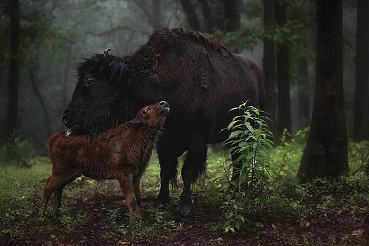 Garett Gabriel - Natures Tender Moments
