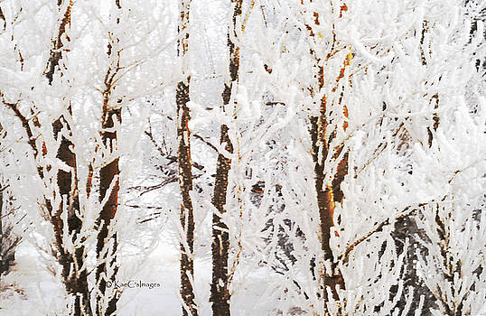 Nature's Winter Abstract by Kae Cheatham