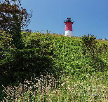 Michelle Constantine - Nauset Lighthouse with Daisies Cape Cod
