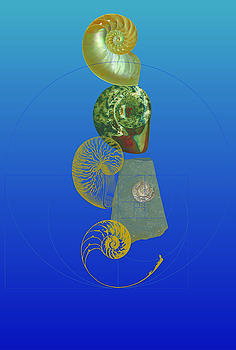 Nautilus and Ammonite by David Strong