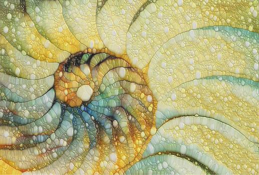 Nautilus by Jack Zulli