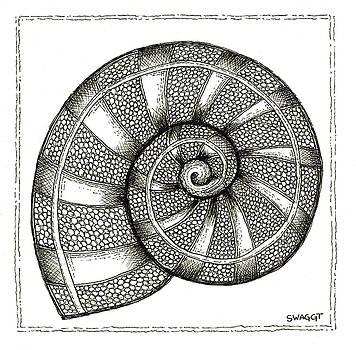Nautilus by Stephanie Troxell