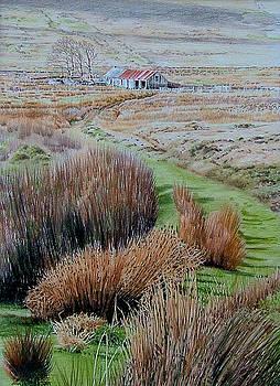 Near Trawsfynydd by Alwyn Dempster Jones