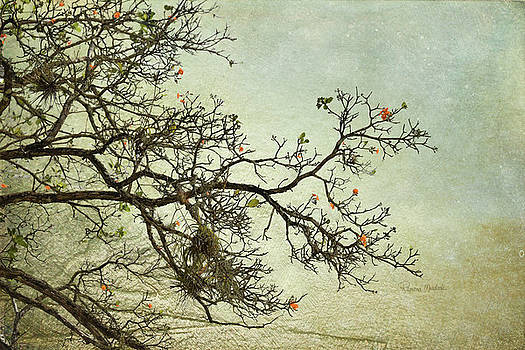 Nearly Bare Branches by Ramona Murdock