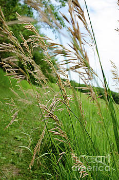 Nebraska Prairie Grass by Kassie Nelson