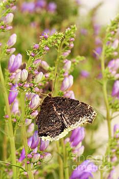 Nectar Break by ArtissiMo Photography