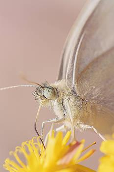 Nectar by Ines Leonardo