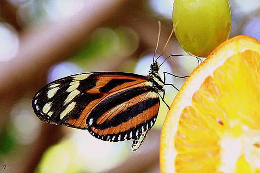 Jason Blalock - Nectar