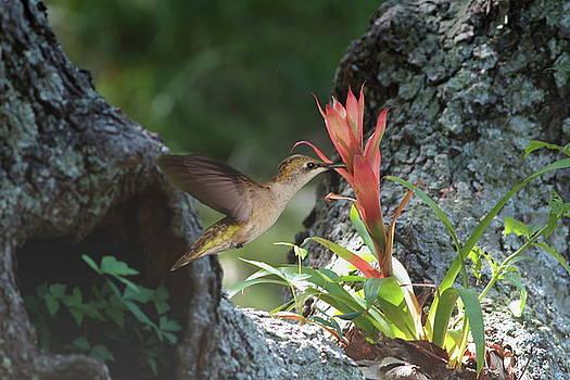 Nectar Lover by Linda C Johnson