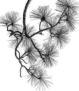 Needles II by Robert Mitchell