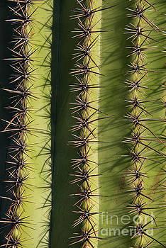 Bob Phillips - Needles of the Saguaro