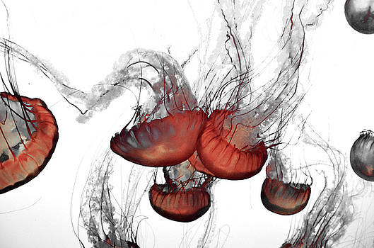 Negative Space Jellyfish by Pacific Northwest Imagery