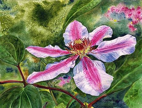 Nelly Moser Clematis by Cynthia Pride