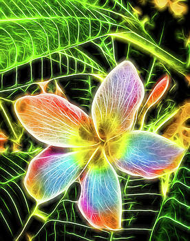 Bonnie Davidson - Neon Plumeria