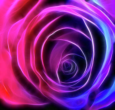 Neon Rose - Pinks to Purple by Lesley Smitheringale
