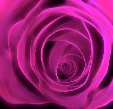 Neon Rose Centre - Cyclamen by Lesley Smitheringale