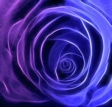 Neon Rose Centre - Purple to Blue by Lesley Smitheringale
