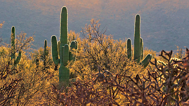 Susan Rissi Tregoning - Neon Saguaro