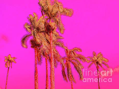 Onedayoneimage Photography - Neon Tropics