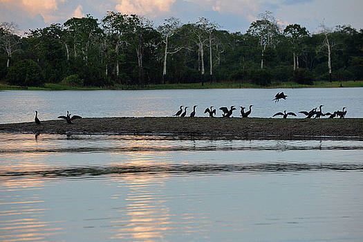Harvey Barrison - Neotropic Cormorant in Sunset Silhouette