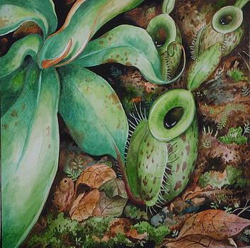 Edoen Kang - Nepenthes Ampullaria