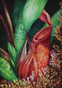 Edoen Kang - Nepenthes of Mesilau