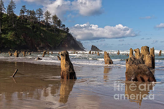Tim Moore - Neskowin Ghost Forest
