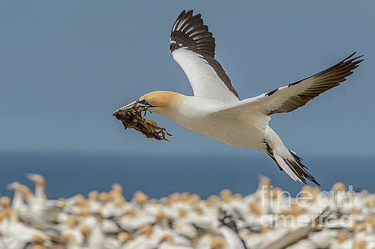 Nest Building by Werner Padarin
