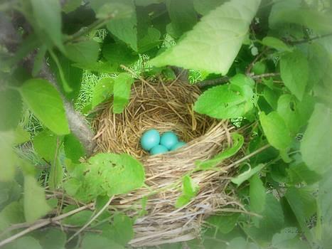 Nest by Cynthia Lassiter