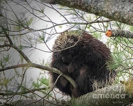Nest or Porcupine by Jan Mulherin