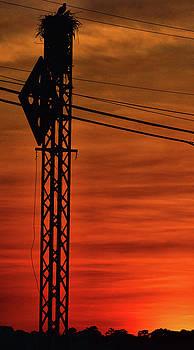 Nestin by Robert McCubbin