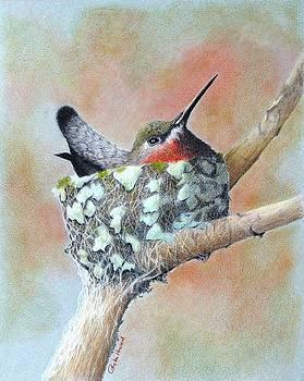 Phyllis Howard - Nesting Anna