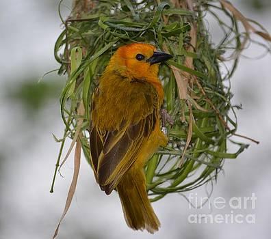 Nesting Bird by Janice Spivey