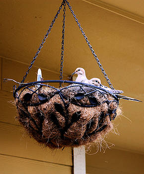 Nick Gustafson - Nesting Doves 2