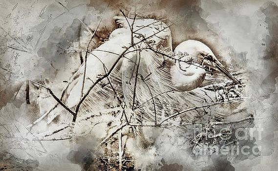 Nesting Egret - Digital Art by David Smith